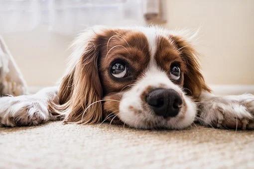 其實狗狗「喝得出水的差別」你偷懶沒洗碗牠都知道