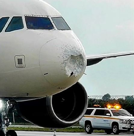 飛機「鼻頭凹陷」高空緊急迫降 航空公司「全怪飛鳥」說謊被抓包