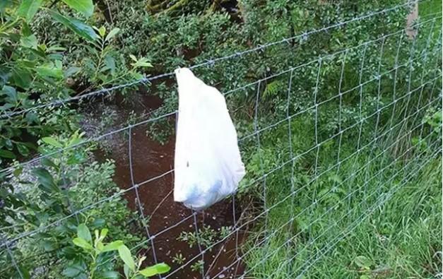 路人發現「塑膠袋」發出哭聲 專家趕到嚇傻:袋子破掉就沒命了