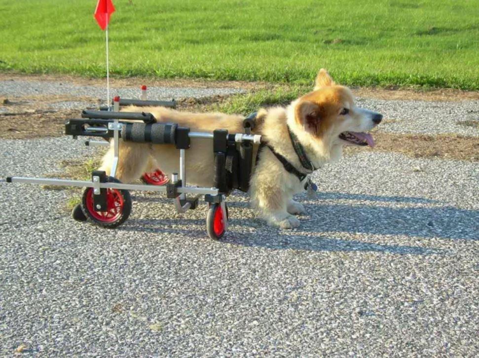 92歲獸醫已退休「卻每天工作」堅持幫「殘障動物」找回笑容!