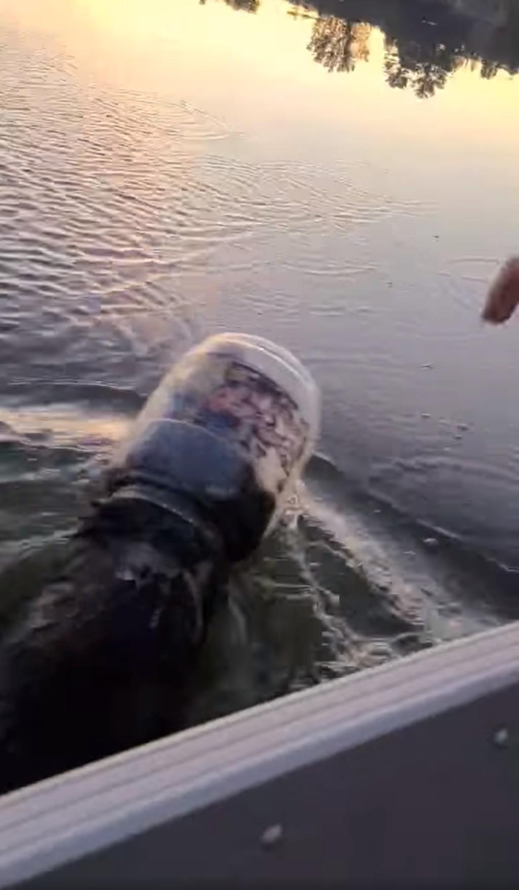 影/湖中驚見熊寶寶「頭卡塑膠桶」 調查才發現已經卡3天!