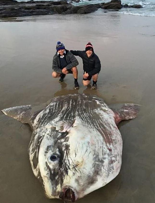 澳洲海灘驚現「2公尺稀有物種」嚇壞遊客:以為是外星生物!