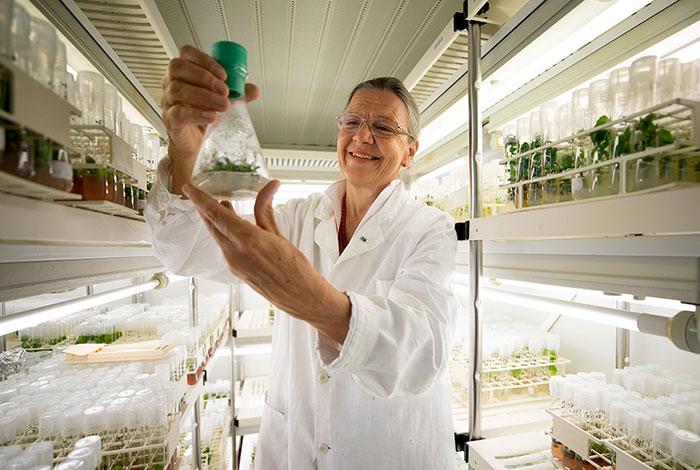 科學家成功種出「冰封3萬年花朵」全是冰原松鼠的功勞!