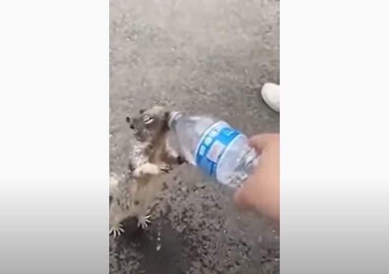 影/松鼠口渴「拜託要水喝」萌翻路人 網質疑:這個行為不OK!