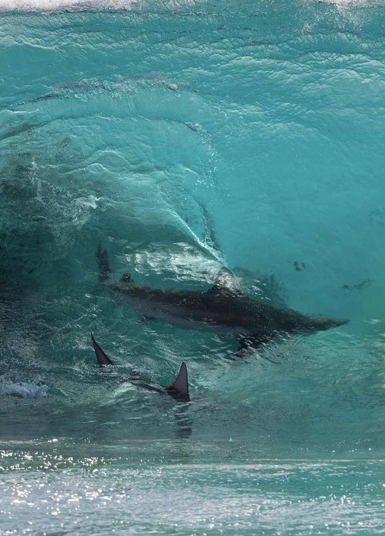攝影師拍到「大海變果凍」瞬間 鯊魚「在天空衝浪」太神奇
