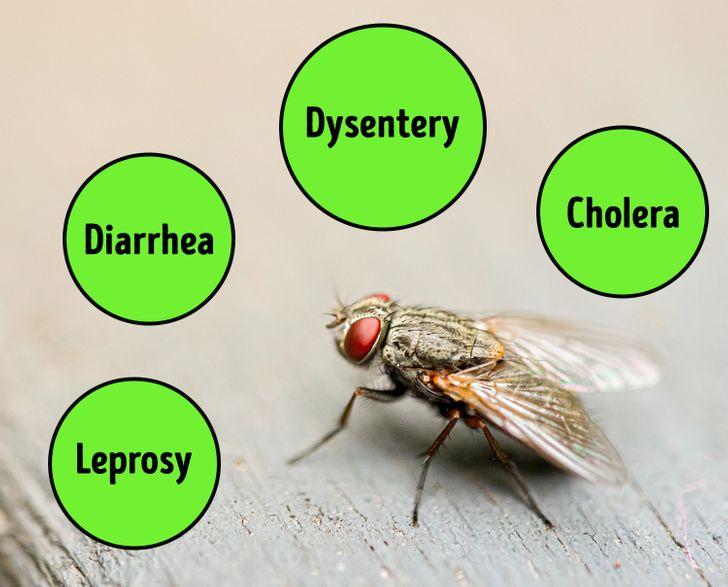 4件「蒼蠅停在你食物上」會發生的事 下蛋在上面只是基本!