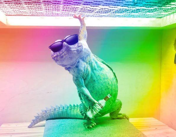 可愛蜥蜴「每天擺好pose」等拍照 網友用PS幫牠圓夢!