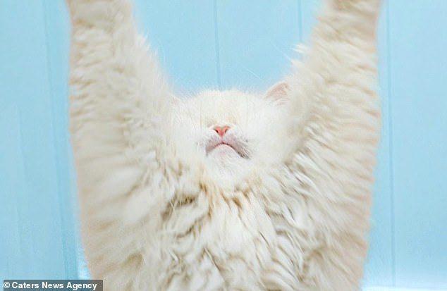 飼主「害波斯貓失去雙眼」超沒良心 她「永不放棄」成了大明星