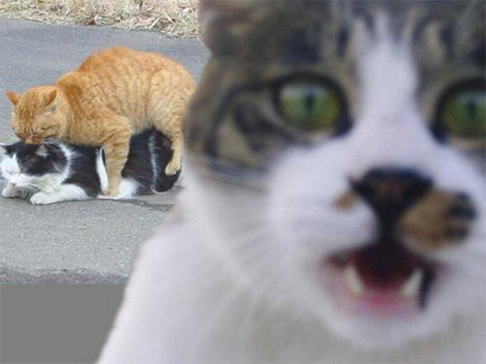 電影導演貓