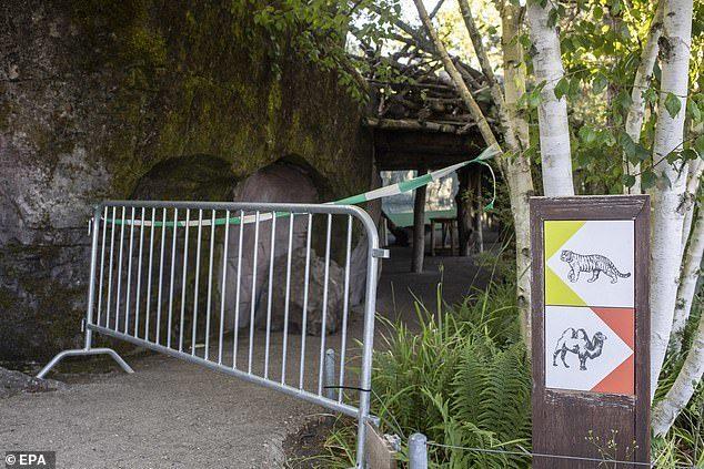 老虎攻擊動物園員工