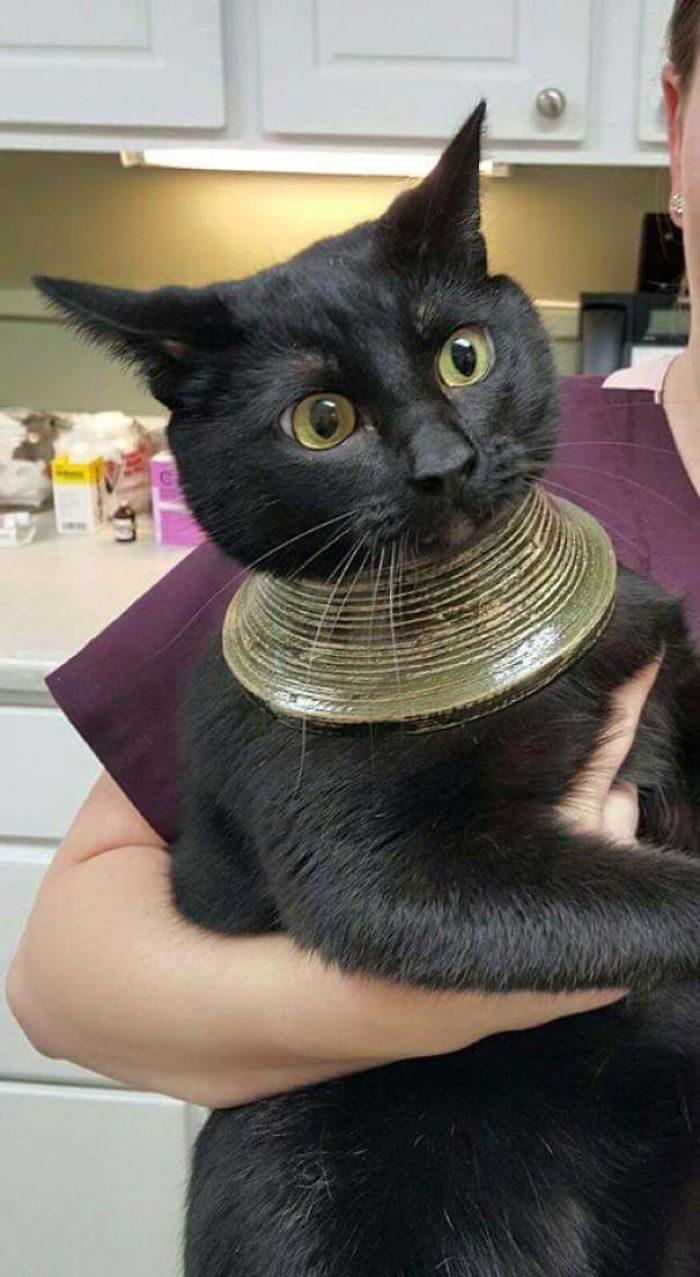32隻需要你秀秀的「最近過不太好」動物 貓皇第一次向人類求救