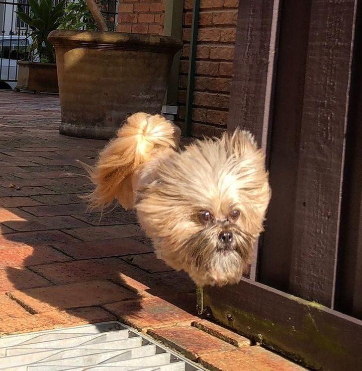 19張「用0.01秒捕捉」的奇蹟照 狗狗「四肢消失」嚇壞主人
