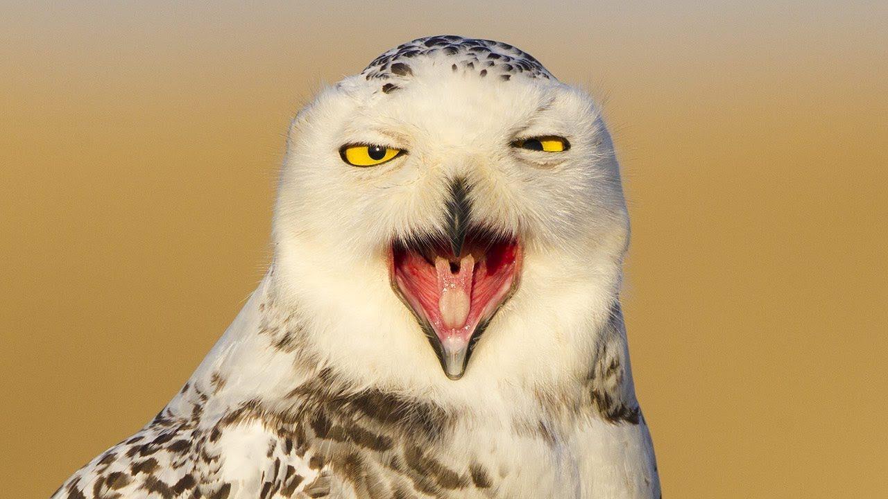 影/自備「收納功能」的鳥!他示範「塞條狀物」還真的成功