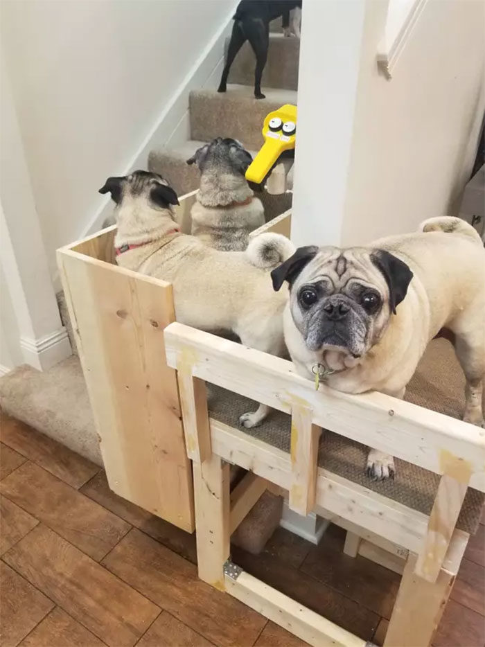 奴才為老愛犬打造「狗狗專屬電梯」 結果最愛搭的不是牠...
