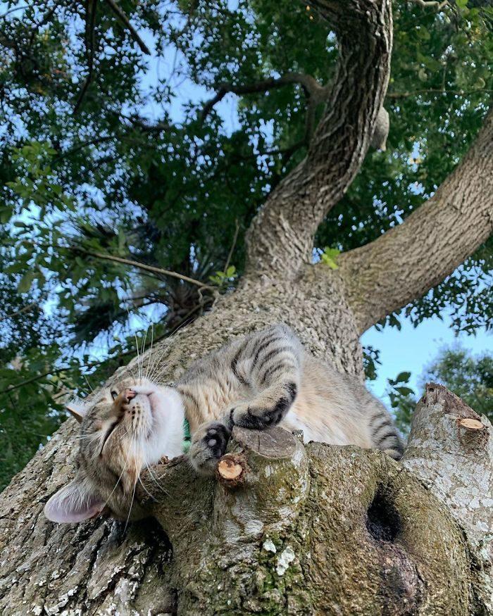 25隻「寧可睡樹上也不跟你睡」的爆笑貓咪 牠睡到直接阿魯巴