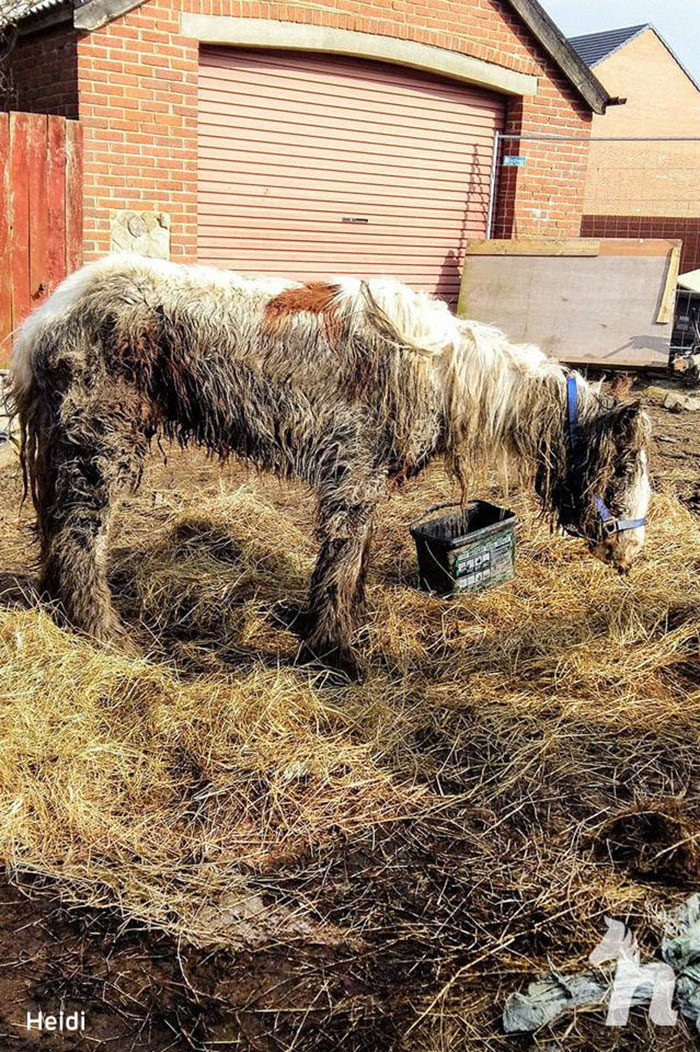 剩最後一口氣!女志工堅持「搶救瀕死小馬」康復過程超感人