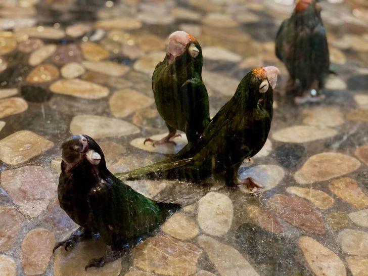 29隻「本年度最佳諧星」調皮鳥 牠跟同伴「手握手」完成交易