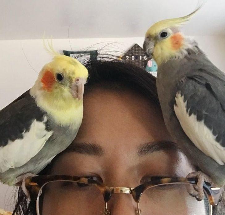 爆笑屁孩鳥類