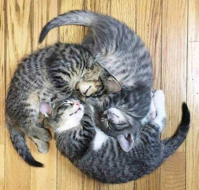 31隻「讓主人崩潰」的貓咪怪睡姿 睡成「愛心」是貓咪基本功