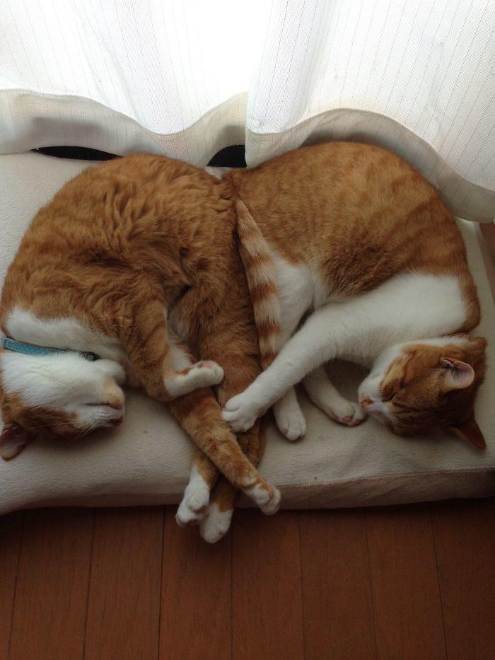貓咪獵奇睡姿