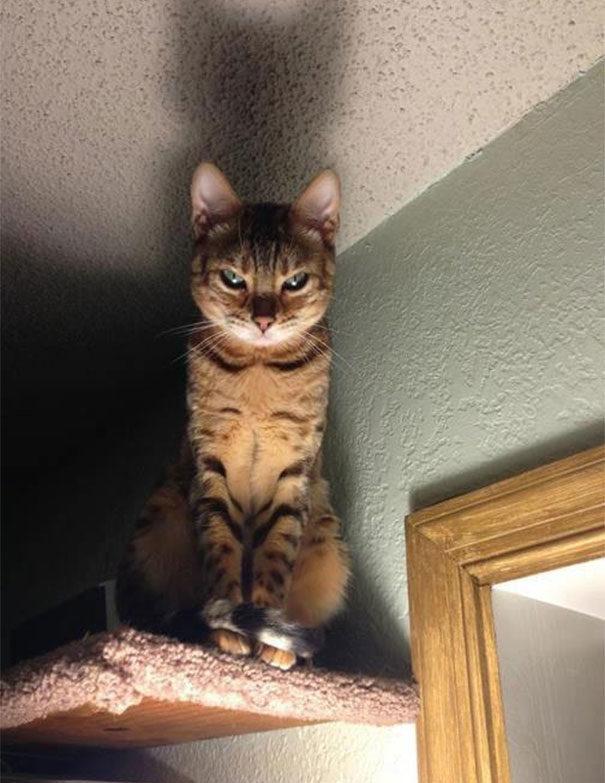 50位值得「拿一座奧斯卡」肯定的演技派貓皇!