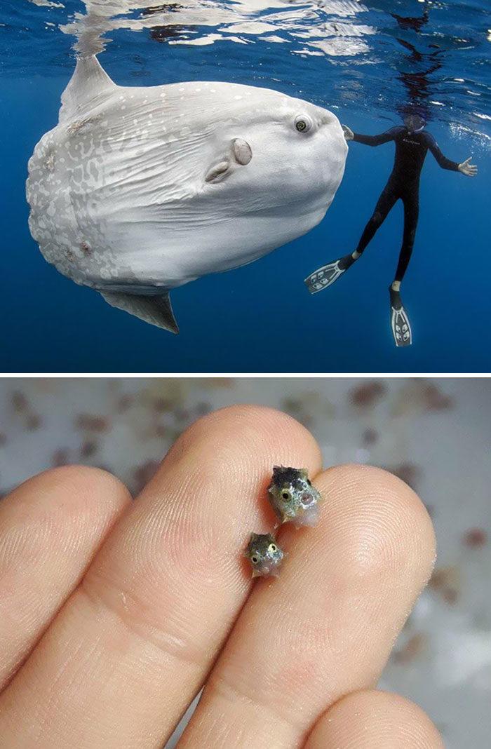 39張提醒「人類有多渺小」的照片 手掌大螞蟻是你今晚的噩夢