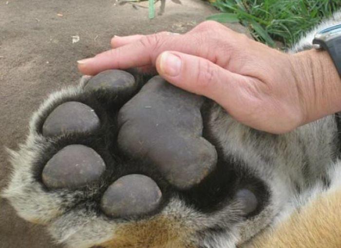 動物比想像大