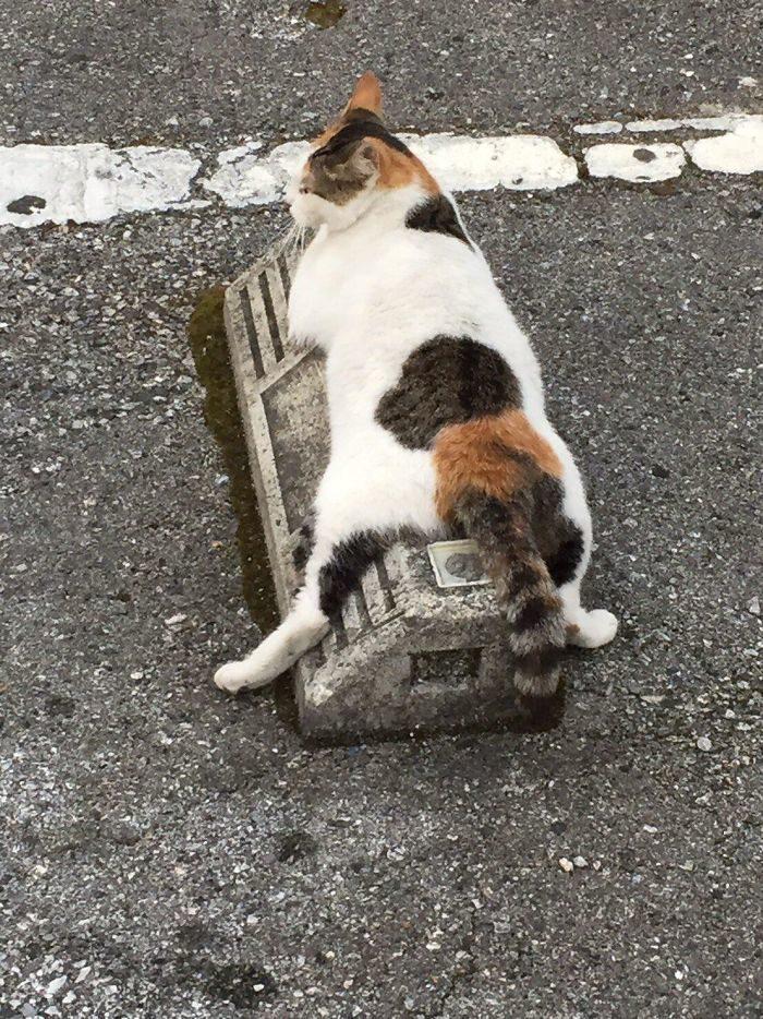 停車場變成「貓幫派的臥室」 頭爽靠「水泥擋當枕頭」超可愛❤