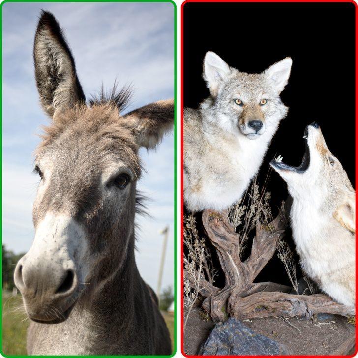 10種「知道後會嚇瘋」的動物秘密 斑馬的「條紋」可以驅蟲!
