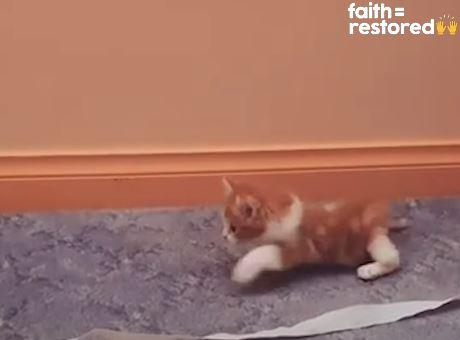 萌貓生來「下肢癱瘓」差點被安樂 自己「學會走路」逃過一劫