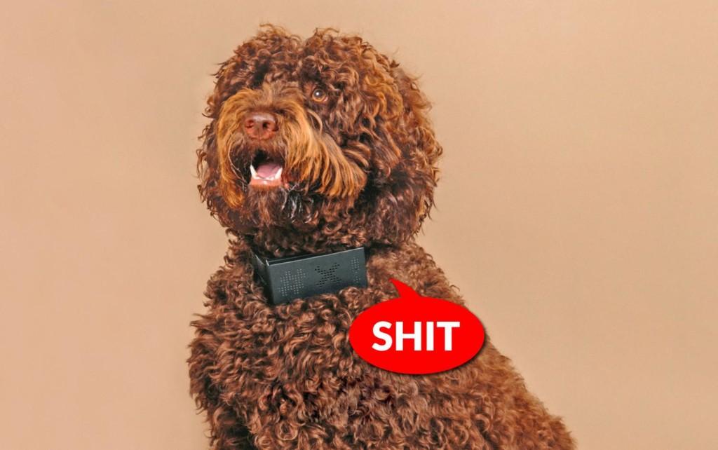 超直白「狗狗髒話項圈」天天爆粗口 叫一聲「立刻幫你翻譯」!