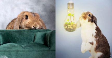 兔派主人打造「激萌兔兔攝影」 小畫家根本「真實版彼得兔」!