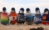 109歲爺爺用「最後人生」付出 織「小小毛衣」拯救落難企鵝