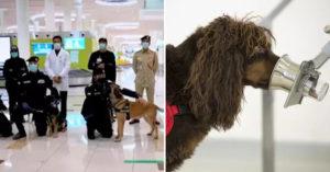 杜拜機場出動「狗狗把關病毒」幾分鐘快篩達「92%準確率」!