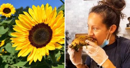 國外爆紅「向日葵BBQ」整朵拿起來啃:吃起來像玉米!