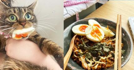 貪吃貓皇偷吃還耍賴「是蛋先咬我的!」奴才嘆:牠是累犯