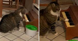 影/貓咪「彈鋼琴說話」指使奴才鏟屎 太有才華紅到「出單曲」!