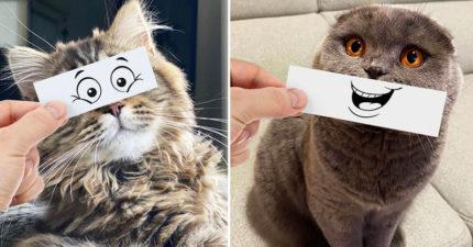 為貓咪姊妹打造「口愛表情包」 超萌效果比迪士尼還吸睛!