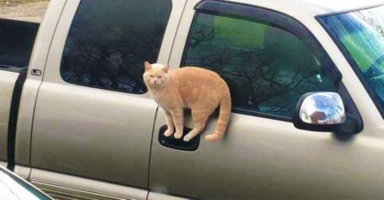 15張「貓咪來自別星球」的證據 懷孕後「挺肚坐」根本大叔!