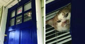 貓奴回家驚見「小臭臉緊貼窗戶」超不爽凝視:出去玩沒揪?