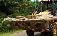 村民捕獲4公尺「惡魔巨鱷」 頭身「分開埋」:這樣才不會復活