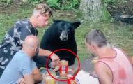 樹林野餐遇「黑熊亂入」餐桌 坐等「花生三明治」:你們好慢...