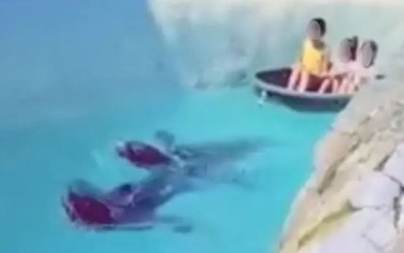 影/海豹「頭套繩子拉船」小孩坐上面 動保團體:雖「自願」仍須停止!