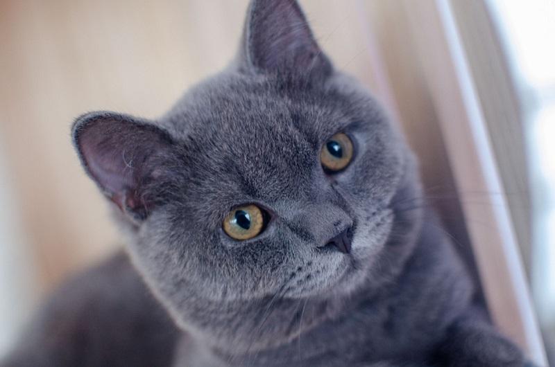 圖書館聘「實習小館長」陪讀書 消息公布:是「7隻小萌貓」!