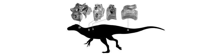 科學家發現距今1.15億年「新恐龍品種」:暴龍的「表親」!
