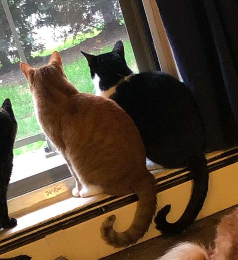 同伴怕打雷!貼心貓「手搭肩膀給安慰」畫面超暖❤