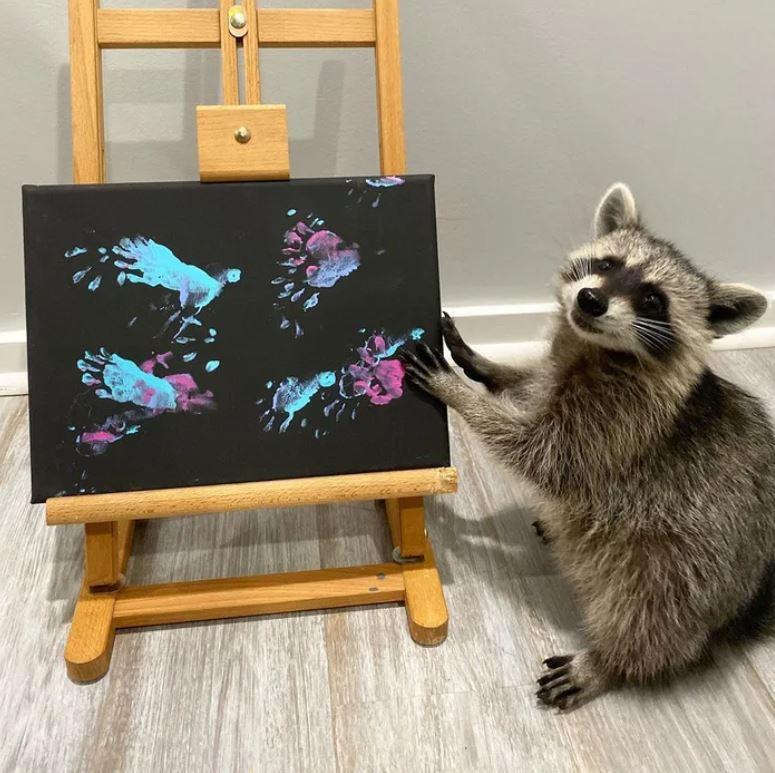「浣熊藝術家」想要你看牠的畫!天分好到「作品熱銷」還開店