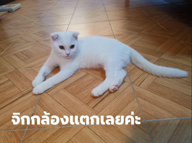 奴才遵循「天然古法」幫貓皇治病 竟意外變會放電的神獸!