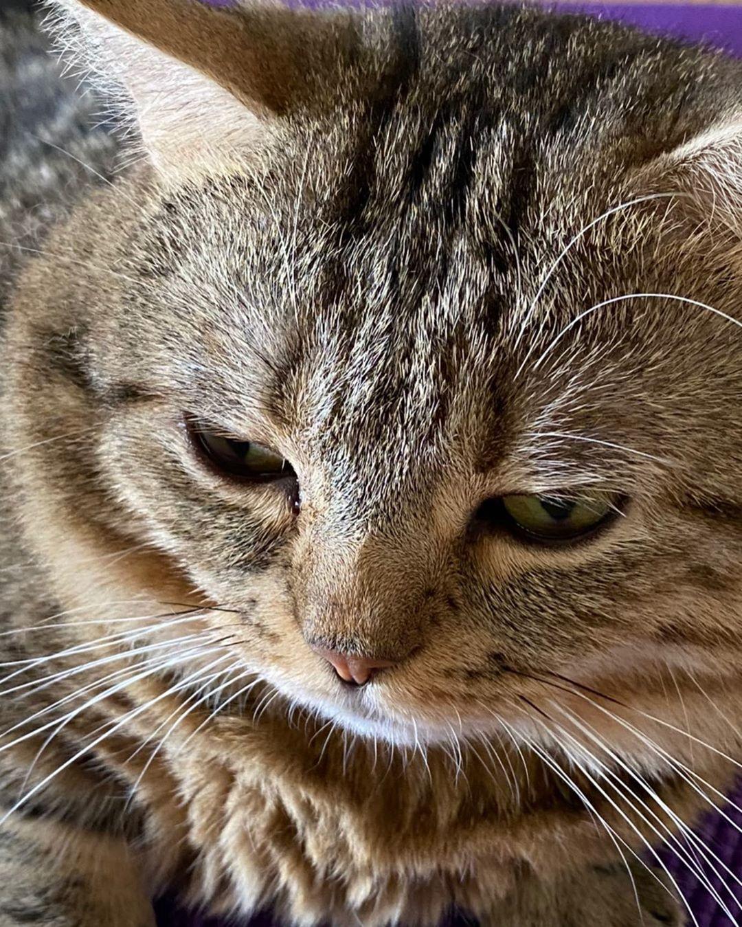虎斑貓偷學「蓋被被睡覺」 睡前還會「睜眼確認」主人有沒有陪睡!