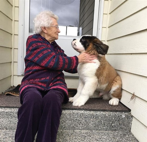 大狗「愛上獨居阿嬤」每天找她玩 「祖孫相處」畫面超溫暖❤